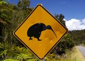 Main thumb kiwi road sign 2062